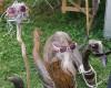 Bilder von der 27. Birdwatchingfair in England/Rutland, 21. bis 23.08.2015