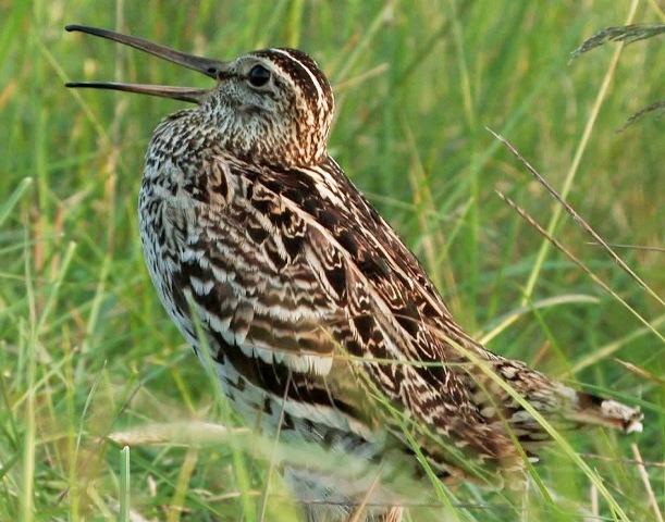 Weissrussland: Brutvögel am europäischen Amazonas