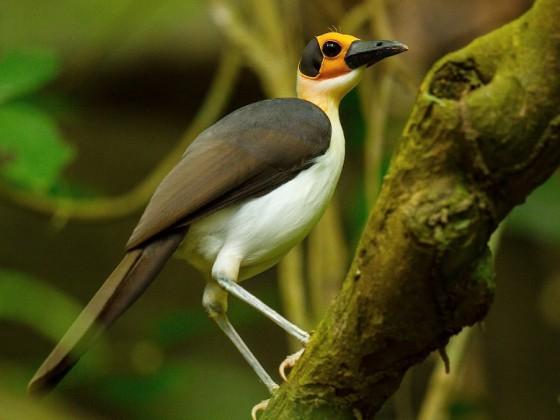 Ghana: Vogelwelt zwischen Goldküste und Savanne