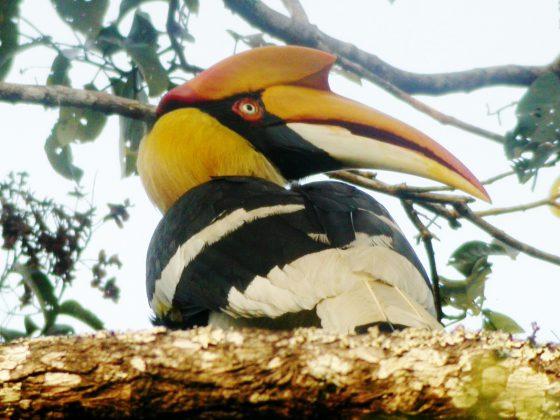 Indien/Kerala: Vogelkundliche Höhepunkte im Süden