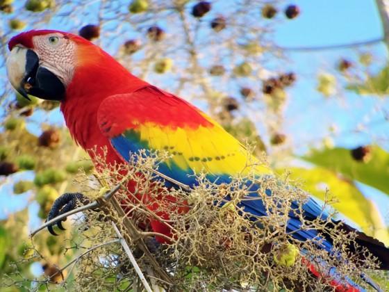 Vogelbeobachtungen in Costa Rica: Land der Kolibris