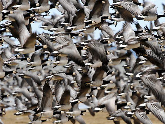 Estland: Herbstlicher Vogelzug und Tierbeobachtungen