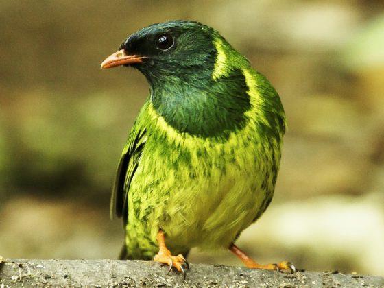 Kolumbien: Zauberhafte Vogelwelt der Anden