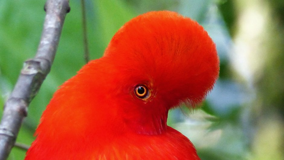 Reisgäste von Kolumbien und seiner Vogelwelt begeistert – neue Reise im November!