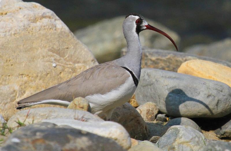 Nepal: Vögel und Natur zwischen Himalaja und Bhudda