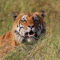 "Vortrag: ""Birds, Wildlife and Nature of Nepal"" am 06. September in Reichenbach"