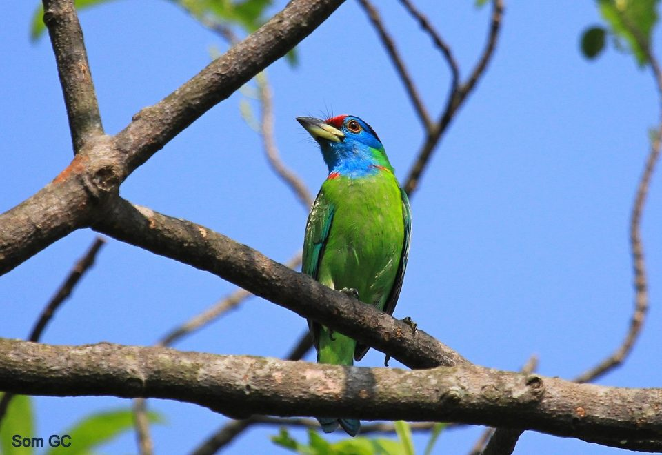 Nepal: Spektakuläre Vogelwelt und Natur im Himalaya
