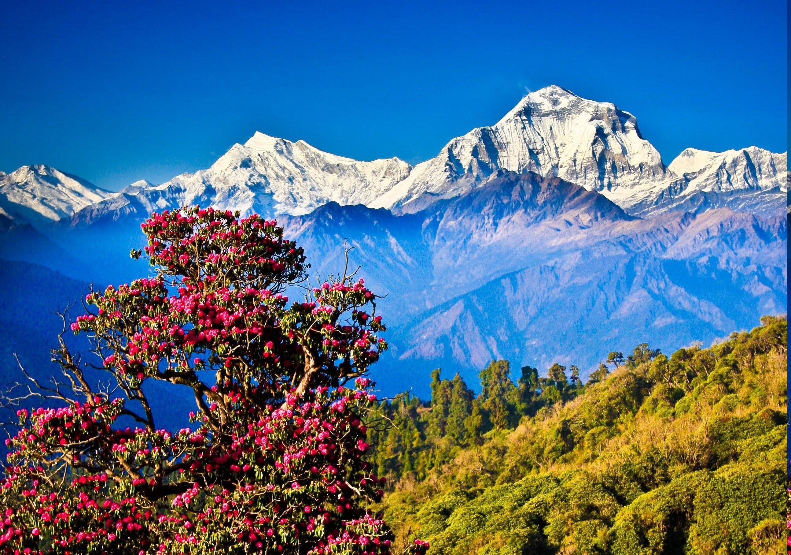 Nepal Spektakul 228 Re Vogelwelt Und Natur Im Himalaya