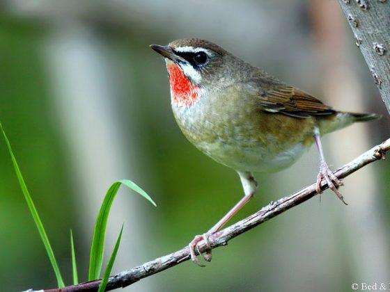 Russland/Ural: Vögel am Ostrand der Westpaläarktis
