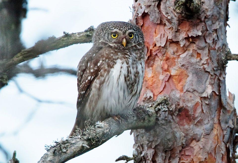 Estland: Vogelfrühling und Bären-Piersch