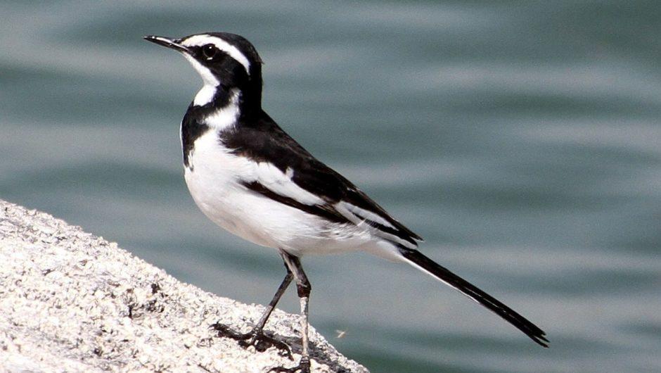 Vorexkursion zur nächsten Nasserstausee-Expedition im März: Unterwegs zur afrotropischen Vogel- und Tierwelt in einer unbekannten Wasser-Wüsten-Traumlandschaft