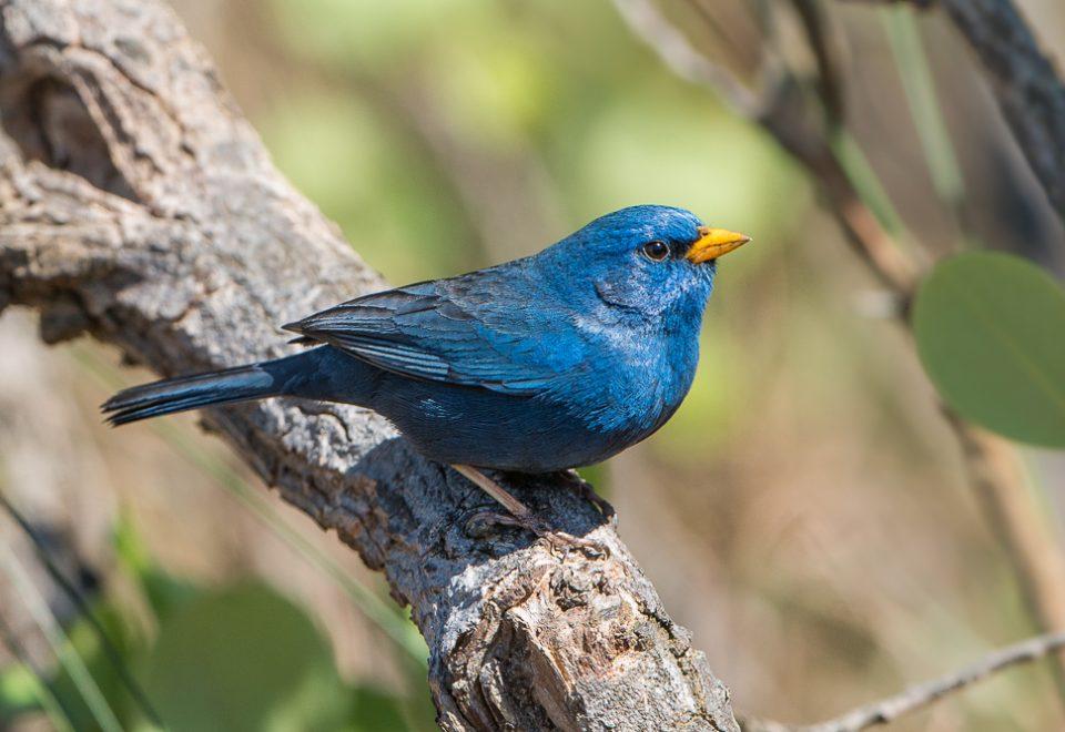 Brasilien: Seltene Vögel und Tiere in der endlosen Steppe