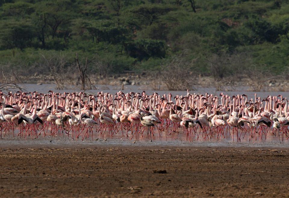 Kenia: Flamingos und Gnu-Wanderung erleben