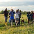 Doppelschnepfenbalz, Lasurmeise und Terekwasserläufer am Brutplatz in den weißrussischen Sümpfen