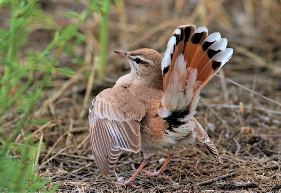 Georgien/Armenien: Vogelwelt am 'Tor zum Orient'
