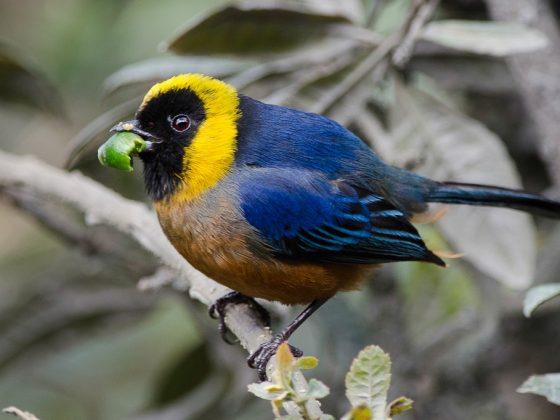 Peru: Seltene Vögel von der Puna zum Amazonas