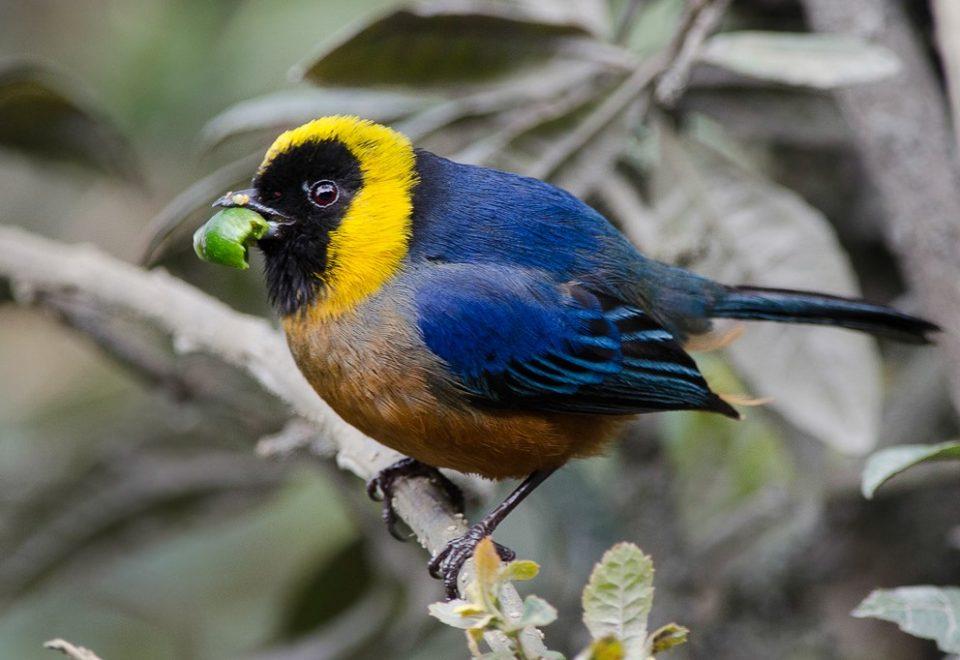 Peru: Seltene Vögel im Manu-Biosphärenrerservat
