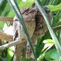 Wo das Froschmaul den Tag verschläft: Auf den Spuren von Kipling's Dschungelbuch-Abenteuern in Südindien unterwegs