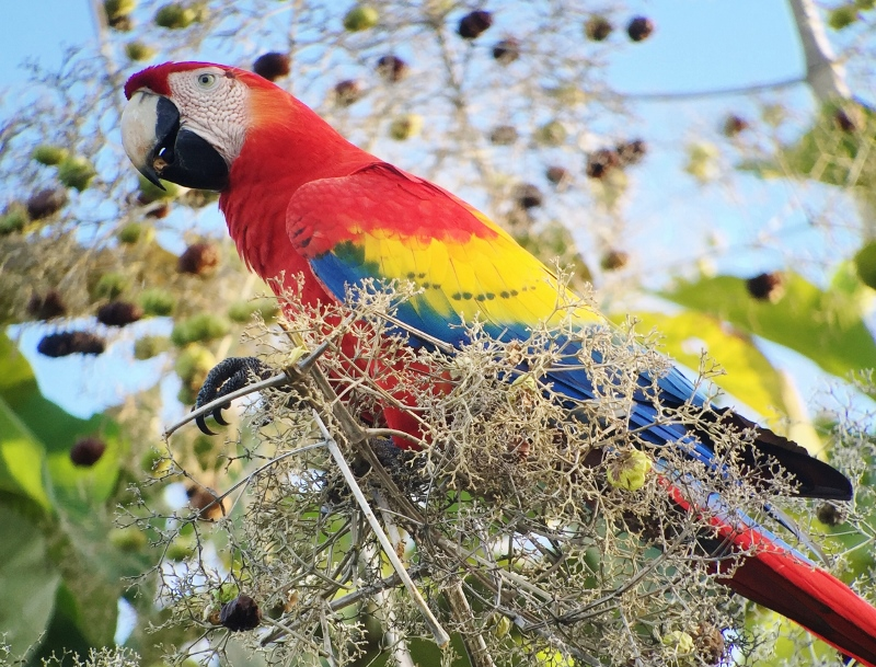 Costa Rica: Unterwegs im Land der bunten Kolibris