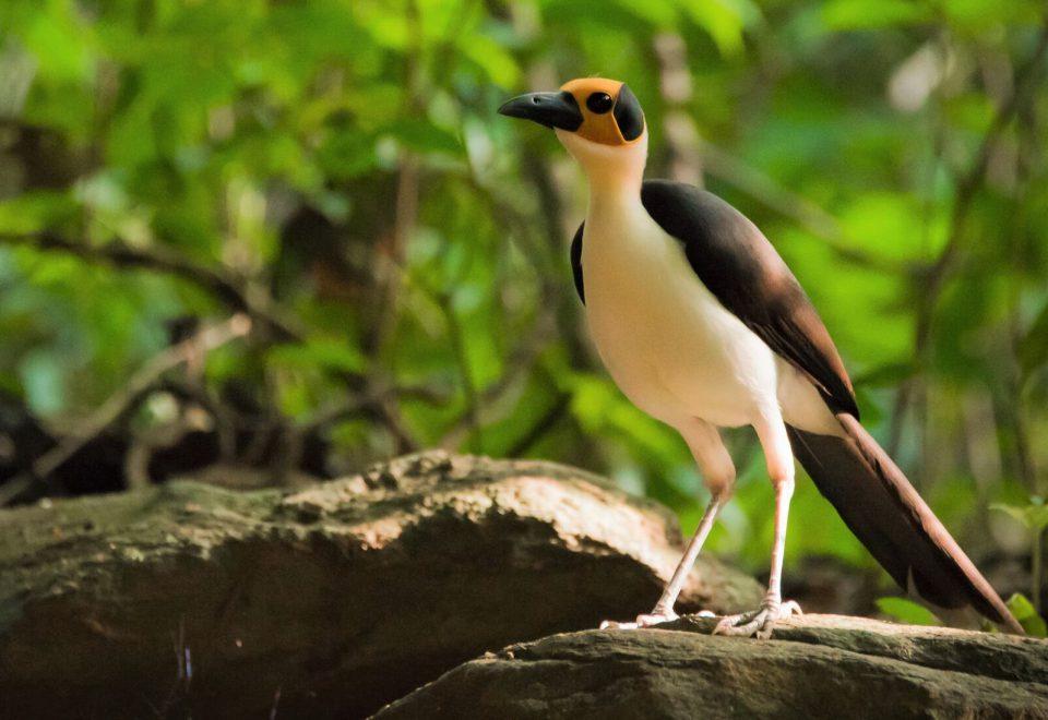 Ghana: Vögel im Guinea-Regenwald und der Sahel-Zone