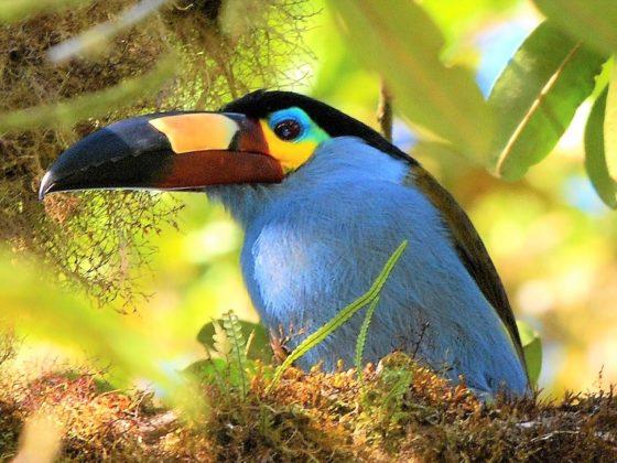 Ecuador: Zwischen Nebelwald und Klein-Galapagos