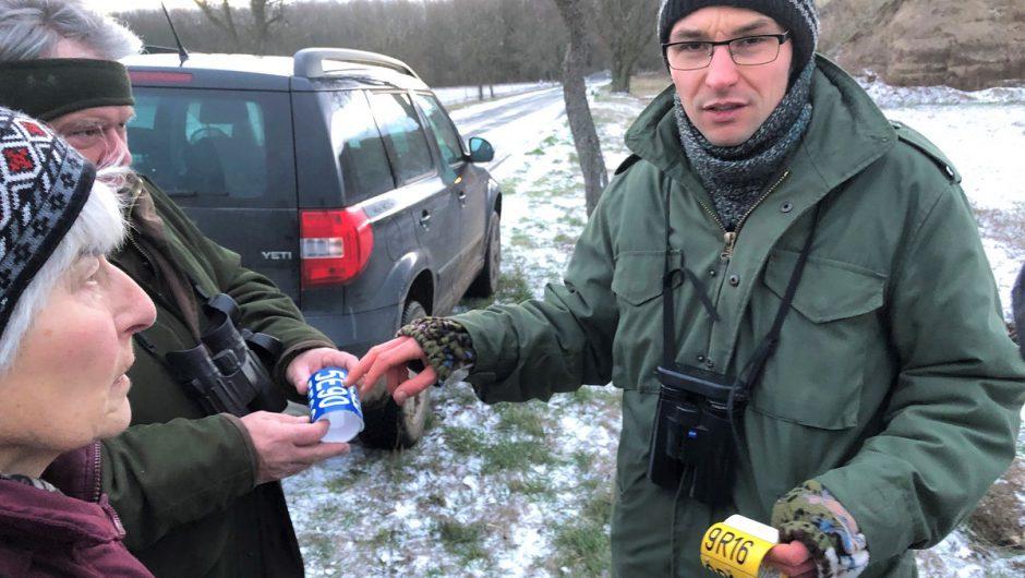 """Bei den """"Vögeln des Glücks"""" in zauberhafter Winterlandschaft im Nationalparks Unteres Odertal unterwegs"""