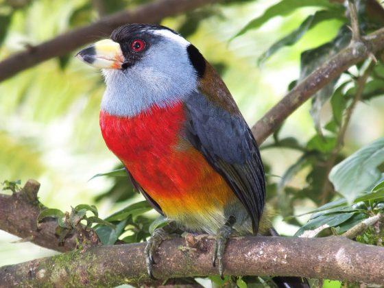 Ecuador: Zwischen Nebelwald und Klein-Galapagos unterwegs