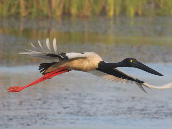 Nepal: Vogelwelt und grandiose Natur im Himalaja