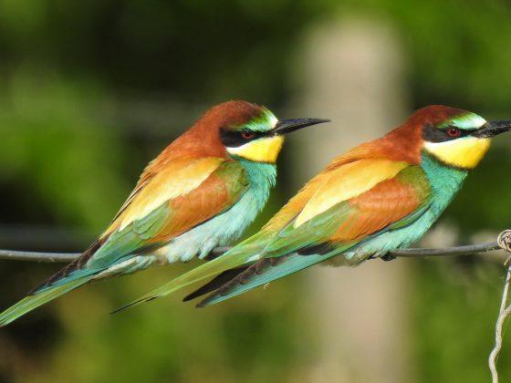 Spanien: Vogel- und Naturparadies Extremadura