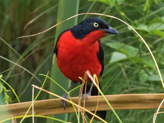 Kenia: Vogelwelt & Wildlife im Großen Afrik. Grabenbruch