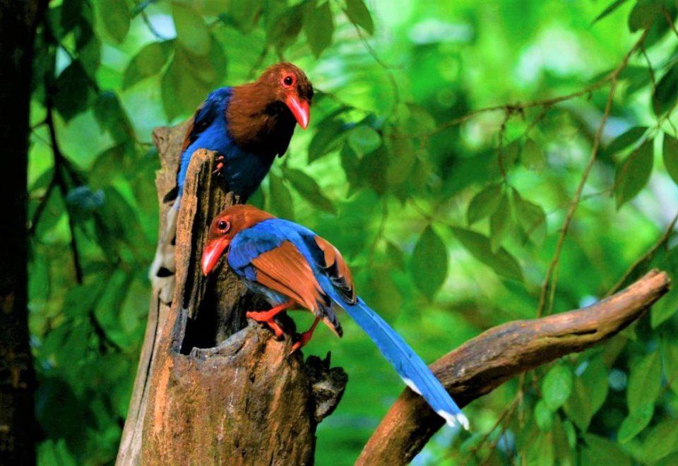 Sri Lanka/Andamanen: Vogelwelt und Meeressäuger
