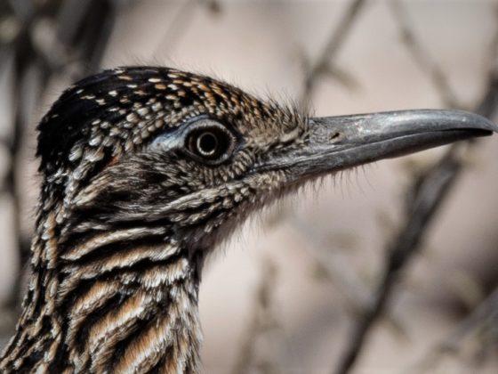 Baja California: Einzigartiges Naturparadies in Mexiko