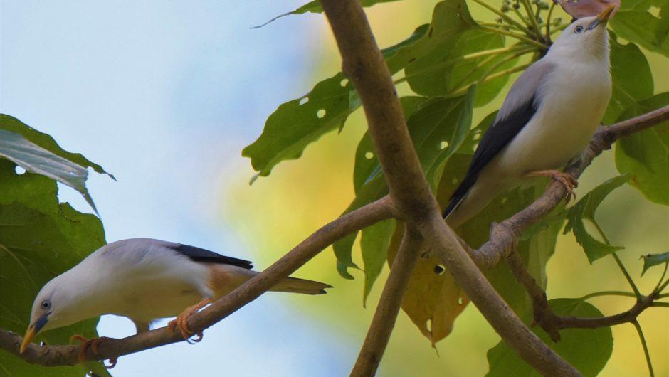 Sonderangebot: Ein Restplatz zur zauberhaften Vogelwelt auf die Andamanen und nach Sri Lanka zum Jahreswechsel