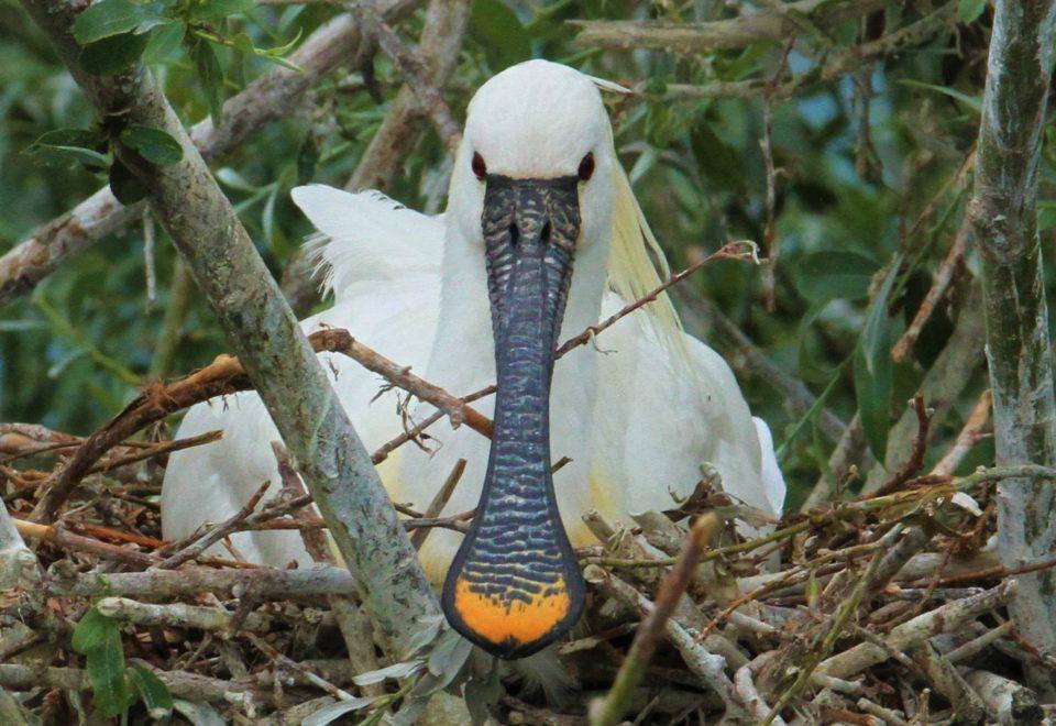 Nordmazedonien/Griechenland: Adler, Geier und Pelikane