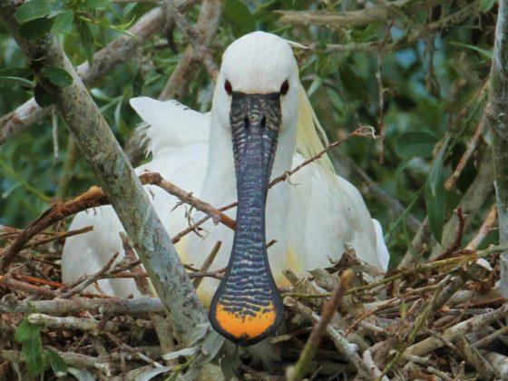 Griechenland: Mediterrane Vogelwelt am Balkan