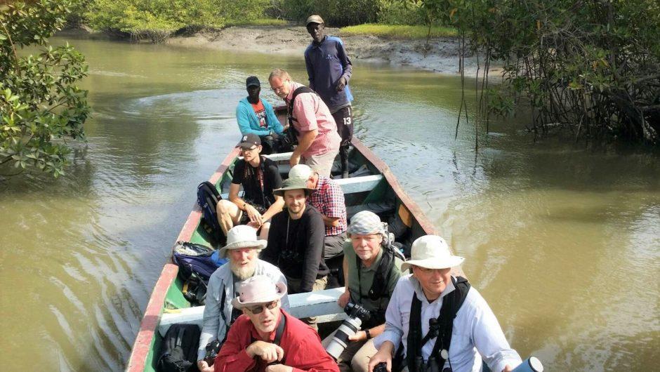 Auf dem Gambia- und Nikolo-Kobe-River unterwegs zu den orn. Höhepunkten Westafrikas