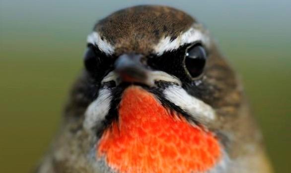 Ohne Einkommen kein Überleben – Dringender Spendenaufruf für unsere freien Birdguides in aller Welt