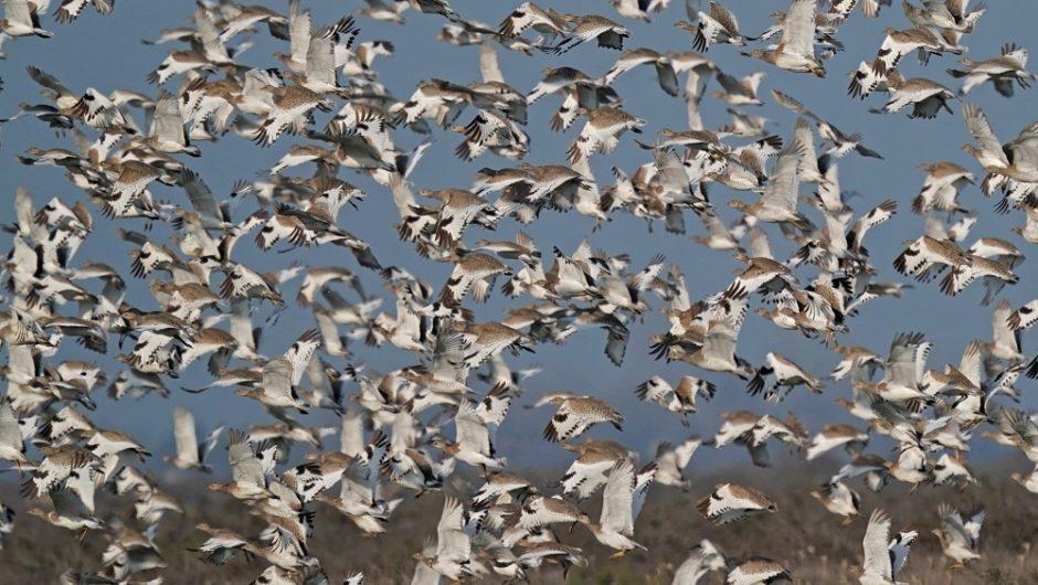 Reisebericht Asberbaidschan: Vogelzug zwischen Kaukasus und Kaspischem Meer in den schönsten Nationalparks