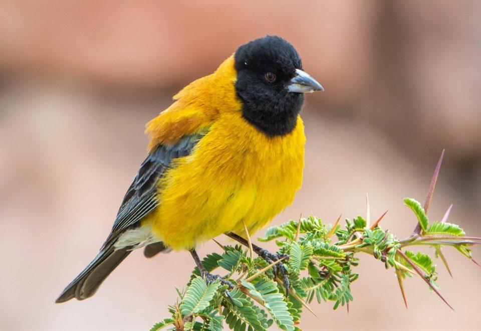 Argentinien: Unbekannte Vogelwelt im Nordwesten