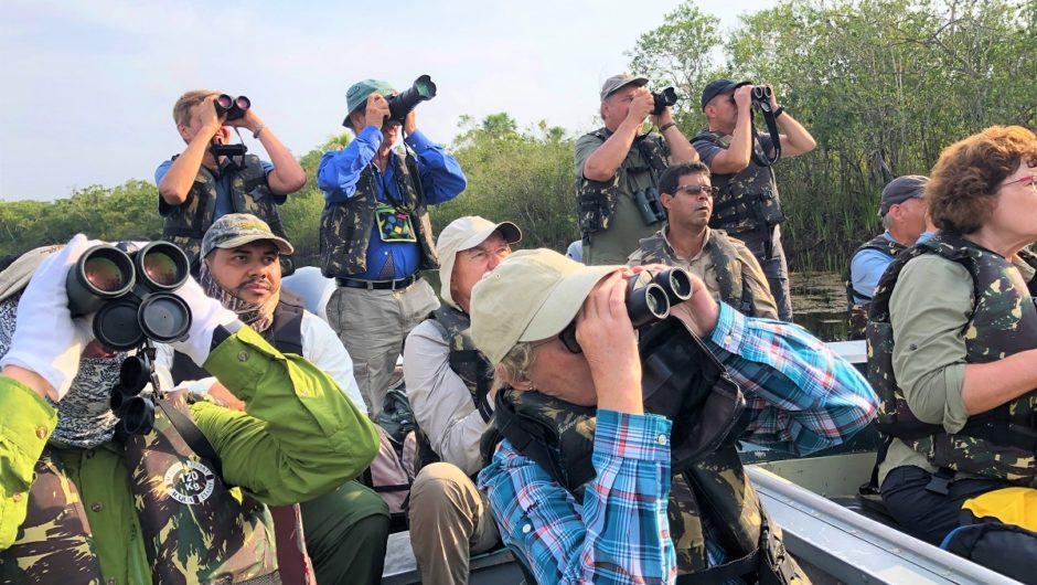 Reisebericht Brasilien: Vogelwelt im Pantanal, in der Steppe und im Südamazonas
