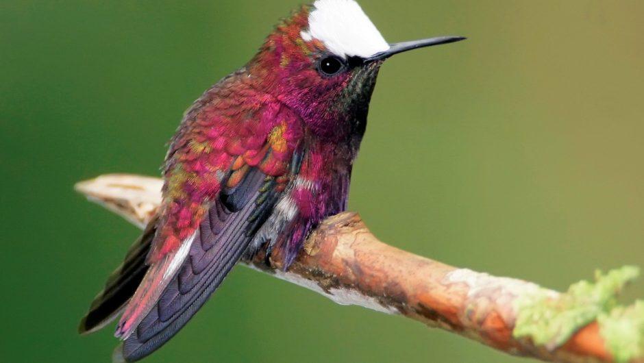 Reisebericht Costa Rica: Unterwegs zwischen Bergen und Meer im Kolibriland