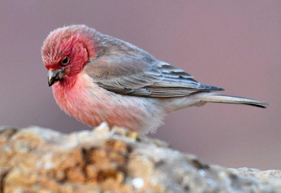 Jordanien: Vogelwelt im antiken Reich der Nabatäer