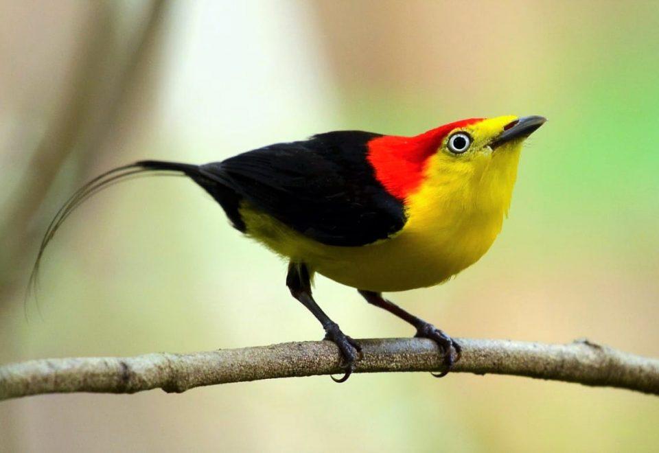 Brasilien: Vogelwelt in der Schatzkarte der Natur