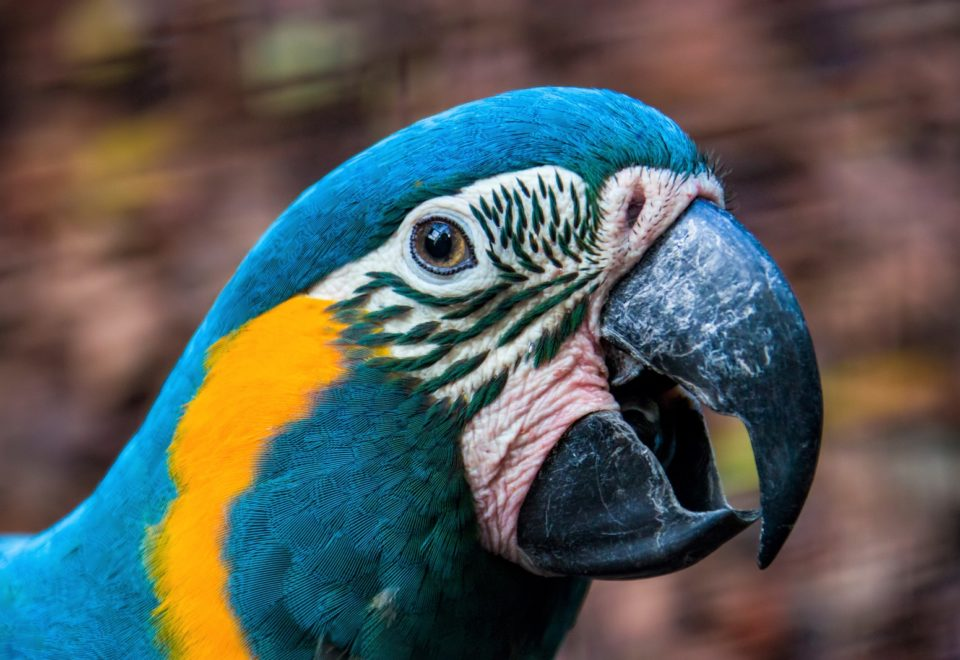 Bolivien: Bird-Safari vom Beni-Sumpf zum Titicacasee