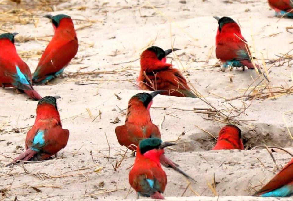Namibia: Vogelparadies zwischen Etosha und Caprivi