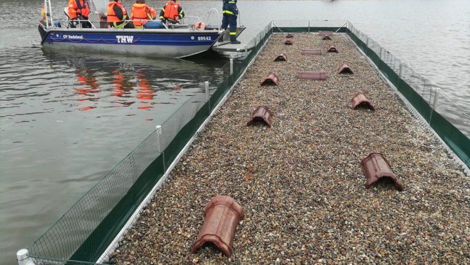 32 Quadratmeter für die Lachmöwe am Stausee Glauchau – Finnischer Ringvogel sorgt für Aufsehen